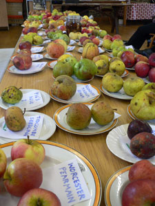 Table covered in different local varieties of apple
